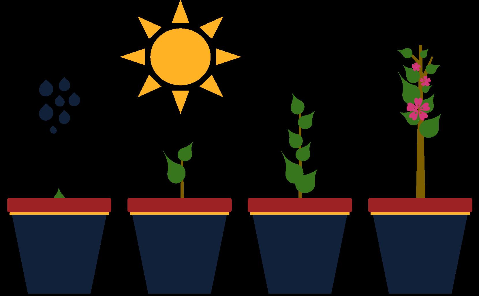 Startup growing (1)